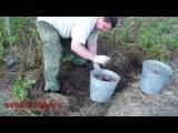 Как вырастить картофель под соломой или сеном